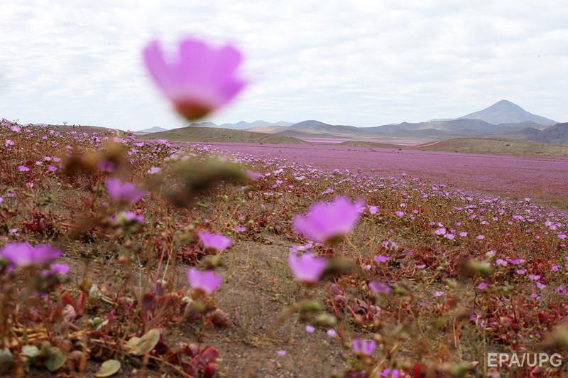 Пустыня Атакама1