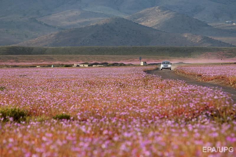 Пустыня Атакама2